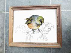 New Zealand native bird, Tauhou (or Silvereye) illustrated postcard, print from original watercolor + ink painting artwork, Wild life art