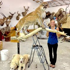 Wildlife Revolutions – Taxidermy Studio Trophy Hunting, Hunting Tips, Hunting Stuff, Mountain Lion Hunting, Antler Crafts, Revolutions, Wildlife, Trophy Rooms, Pure Beauty