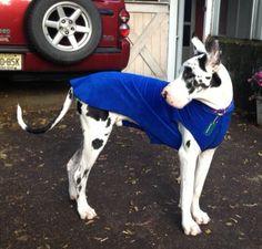 big puppies need sweaters too