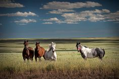 Four Horses in a pasture beneath the Great Big Sky in Montana - A Western Fine Art Landscape Photograph