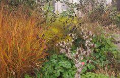 incorporating color and texture Prairie Garden, Meadow Garden, Holland, British Wild Flowers, Meadow Flowers, Flowers Perennials, Shade Garden, Garden Plants, Plant Design