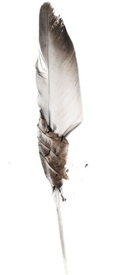 ★ℒ ★Leaf wrapped around a feather