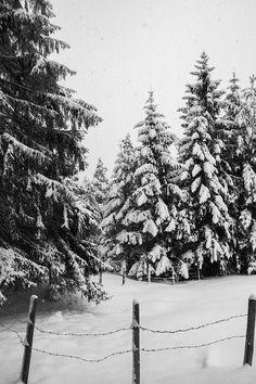 Pine Trees Forest, Snowy Forest, Snowy Trees, Forest Art, Winter Trees, Winter Cabin, Cozy Winter, Vintage Winter, Winter Photography