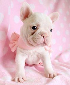 Omg how cute