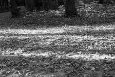 Campo grande, Valladolid My Photos, Snow, Black And White, Outdoor, Campo Grande, Outdoors, Blanco Y Negro, Black White, Black N White