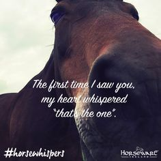 No better feeling than when it's meant to be! #horsewhispers #horseware…