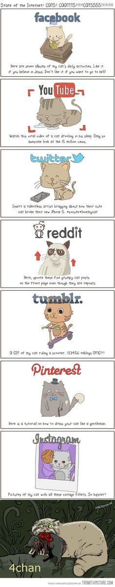 The Internet explained with cats…never 4chan never