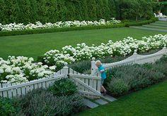 garden gate with white hydrangea
