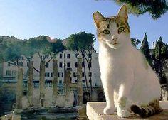 Gatto di Roma. A Cat in Rome.