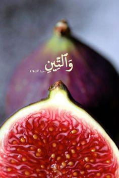 وَٱلتِّينِ سورة التين :1 By the fig Surat Al ten :1
