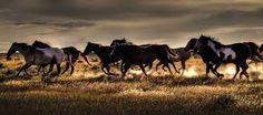 Resultado de imagem para fotografias de cavalos árabes
