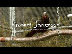 Kaka returns to the Abel Tasman National Park - YouTube