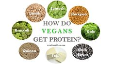 Vegans don't eat enough protein Protein Diets, Lean Protein, No Dairy Recipes, Snack Recipes, Reasons To Be Vegetarian, Vegan Dishes, Healthy Snacks, Nutrition, Free