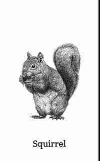 Bộ sưu tập hình ảnh cho App animal 4d miễn phí mới nhất 2019 All Animals Photos, Animal Pictures, Mexican Sombrero Hat, Classroom Door Displays, Flashcards For Kids, English Writing Skills, Dark Wallpaper, Animal Cards, Stuffed Animals