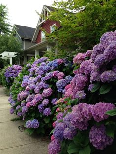 My sister's front yard. Fort Langley, B.C.