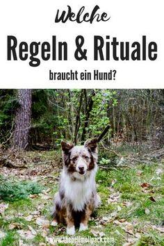 Regeln und Rituale im Zusammenleben mit Hund sind unglaublich wichtig   Hundeerziehung   Hundetraining   Alltagstraining   thepellmellpack.com