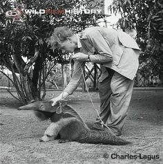 David Attenborough with a giant anteater (1957) i kinda want one