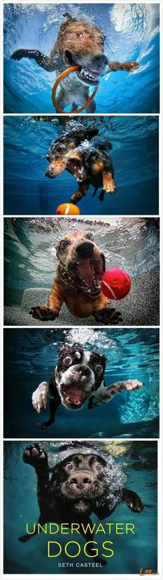 The best dogs love water