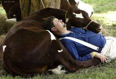 Amish have a nap