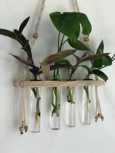Hanging Propagation Station 4 Slot Live Plant Cutting Propagation w/ Glass Tube. - Hanging Propagation Station 4 Slot Live Plant Cutting Propagation w/ Glass Tubes Braided Macramé - Hanging Plants Outdoor, Diy Hanging, Hanging Planters, Indoor Plants, Indoor Gardening, Indoor Herbs, Organic Gardening, Porch Plants, Decoration Plante