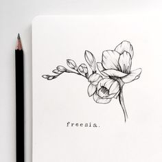 """1,858 Likes, 28 Comments - Meghan Davey✌ (@heysailor_) on Instagram: """"Welcome to Day 1 of #floralsyourway - freesia! I thought I would go back to basics with this one…"""""""
