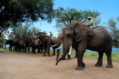 Elephant experience with Saf Par close to Livingstone in Zambia. Livingstone, Adventure Holiday, Victoria Falls, Game Reserve, Whats New, Elephants, Safari, Character Design, Southern
