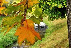 NINIVEMAIL: Fotografie přírody. Slunečný den babího léta je do...