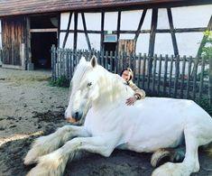 Big Horses, Black Horses, Cute Horses, Horse Love, Andalusian Horse, Friesian Horse, Arabian Horses, All The Pretty Horses, Beautiful Horses