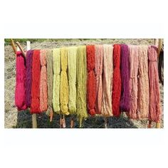color crushing     hand-dyed skeins of yarn drying in the warm sun