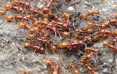 Image Gallery: Ants of the World | LiveScience