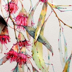 Art suggestion Eucalyptus in watercolor on Behance Australian Wildflowers, Australian Native Flowers, Australian Art, Watercolor And Ink, Watercolor Flowers, Watercolor Paintings, Watercolours, Watercolor Artists, Space Watercolor