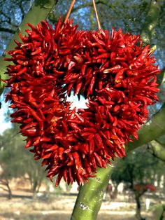chili pepper heart wreath