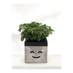 LAYLA - The Happy Planter | Black | Face | Handcrafted Gift | CactusSucculent Pots | Concrete Creation | Minimalist | Rustique | Local Face Planters, Concrete Planters, Happy Smiley Face, Boat Decor, Jewelry Tray, Big News, Group Boards, Houseplant, Retail Shop