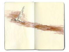 Pallid Swift.  Sketch of bird over Marrakech skyline using brown Winsor Newton ink on Moleskine journal.