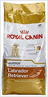 Royal Canin Labrador Junior 12 Pet Supplies Best Supplies Canin India Kg Labrador Royal Royal Canin Dog Food Dog Food Recipes Royal Canin