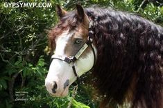 vanner horse - Google Search