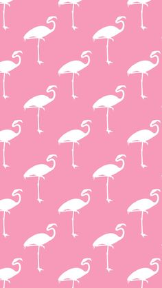 Free iPhone Wallpaper Flamingos