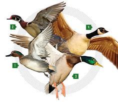 Best Duck Loads: How To Pick the Right Shell for the Right Bird | Outdoor Life