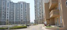 #FlatsForRentINGUrgaon #2bhkForRentINGurgaon #ResidentialPropertiesINGUrgaon #FlatsWithoutbRoker