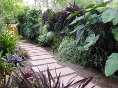 plants for shady side of house - Google Search