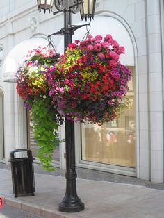 Beautiful hanging baskets on Rodeo Drive in Los Angeles, CA Plants For Hanging Baskets, Hanging Flower Baskets, Hanging Planters, Hanging Gardens, Fall Planters, Container Plants, Container Gardening, Succulent Containers, Container Flowers
