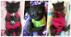 Volunteer Made Sock Sweaters To Help A Wounded Rescue Kitty, And They're Too Cute