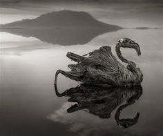 When animals die in Lake Natron they are turned into calcified statues because of the high concentration of salt - Wall to Watch
