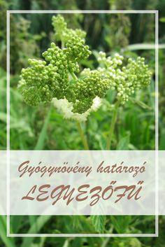 felső zsírégető gyógynövények leo laporte fogyás