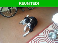 Great news! Happy to report that Bucky has been reunited and is now home safe and sound! :)