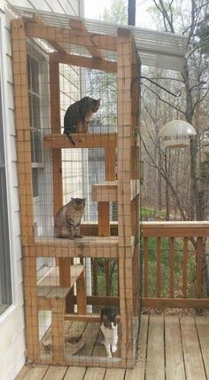 Porch time, spring is in the air! : cats playground outdoor diy - Tracy - Porch time, spring is in the air! : cats playground outdoor diy Porch time, spring is in the air! Diy Cat Enclosure, Outdoor Cat Enclosure, Diy Pour Chien, Cat Habitat, Diy Cat Tree, Cat Trees, Outdoor Cats, Outdoor Cat Cage, Cat House Outdoor
