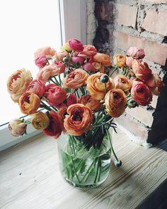 #kwiatysapiekne #jaskry #ranunculus