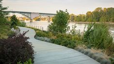South Waterfront Greenway: The Reclamation of The River's Edge for Public Recreation What Is Landscape, Portland City, River Walk, Bike Trails, Natural Resources, City Art, Beautiful Buildings, Landscape Architecture, Habitats