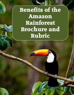 This project has students create an informational brochure about the benefits of the Amazon Rainforest and efforts being made to save the rainforest.  Students will use books or the internet to identify important facts about the Amazon Rainforest, why it's valuable to us, and ways we can save the rainforest.