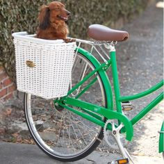 Fab.com | Cruiser Pannier Basket  We have two dachshunds. Can you see us riding our vintage red tandem with 'dachshunds-in-baskets' on either side of back fender?